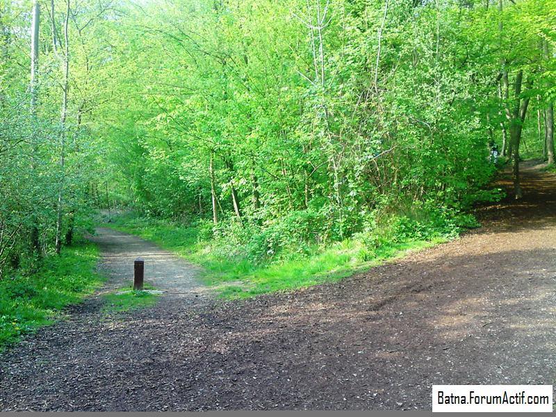 Parc de sceaux  (1) P13-0416