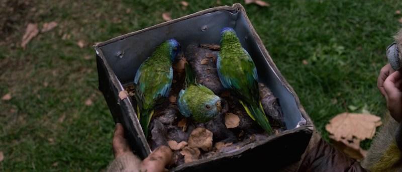 BIRD BOX (Susanne Bier) Asin17
