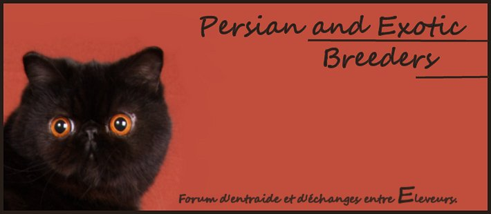 Persian & Exotic Breeders.