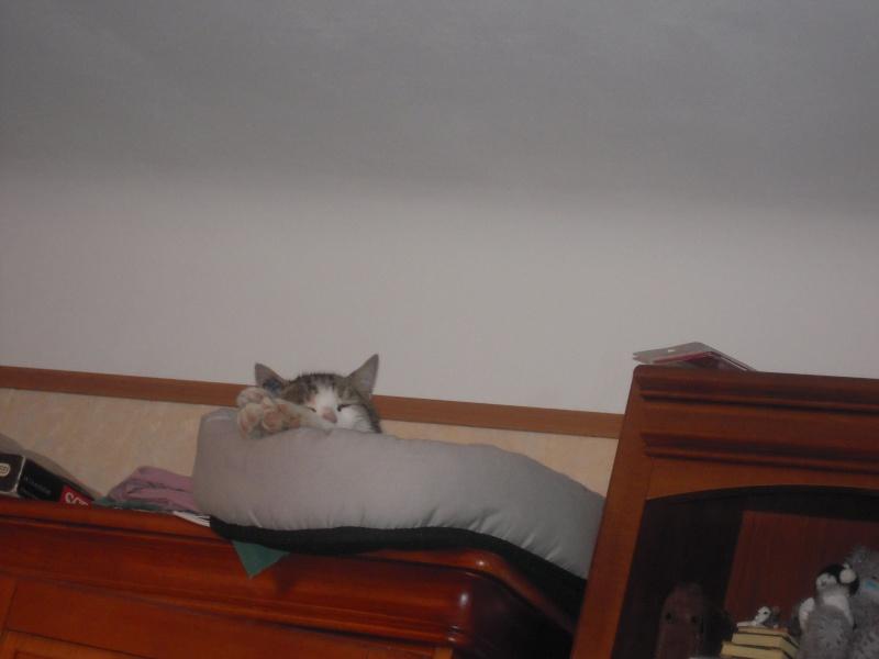 Spyke, 2 ans, recherche FA ou adoptant (urgent) Spyke_15