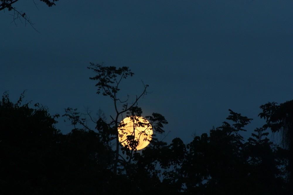 La Lune - Page 12 Img_2110