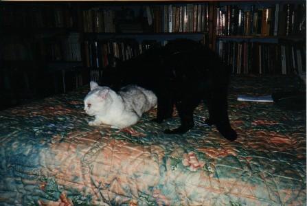 une chatte stérilisée en chaleur?!! Dp_cra10