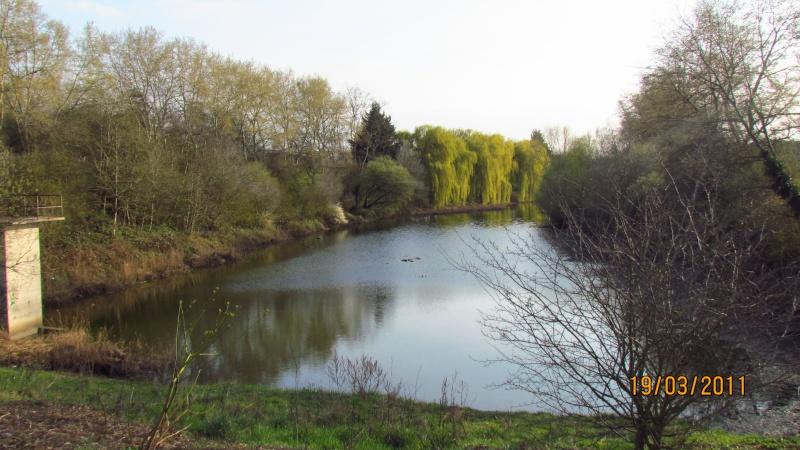 ils ont pollué, mon lac.......... - Page 2 Img_3020