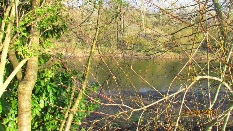 ils ont pollué, mon lac.......... - Page 2 Img_3021