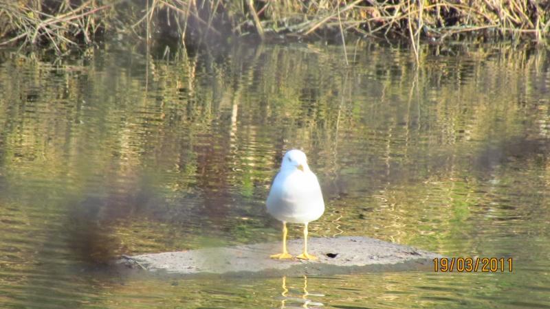 ils ont pollué, mon lac.......... - Page 2 Img_3023