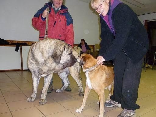 chien visiteur Coco_v10