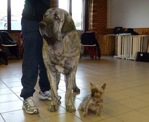 chien visiteur Coco_v13