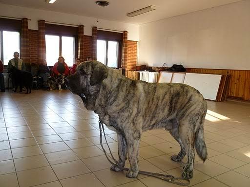 chien visiteur Coco_v14