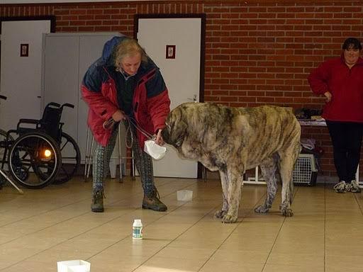 chien visiteur Coco_v17