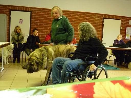 chien visiteur Coco_v18