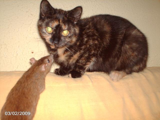 """les """"non-rats"""" de l'arche Asorti11"""