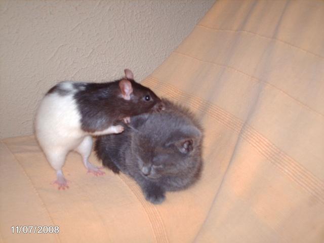 """Débat du mois de juillet : """"Le rat et les autres animaux"""" Nimo_010"""