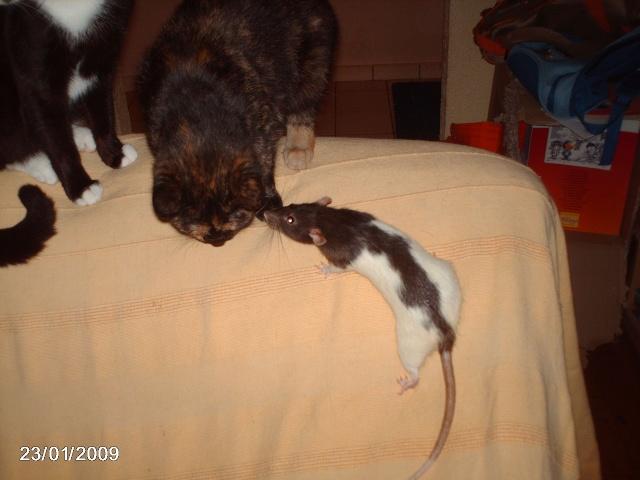 """Débat du mois de juillet : """"Le rat et les autres animaux"""" Prasen21"""