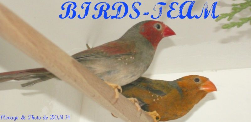 BIRDS-TEAM