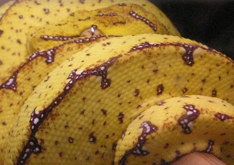 mes reptiles 20923510