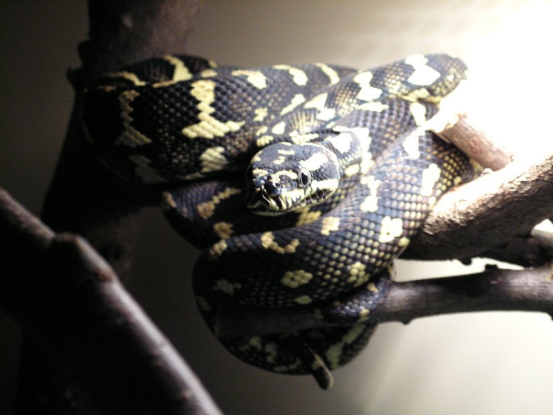 mes reptiles Pict0221