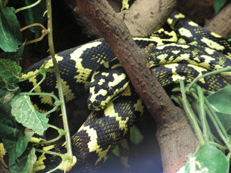 mes reptiles Pict0311