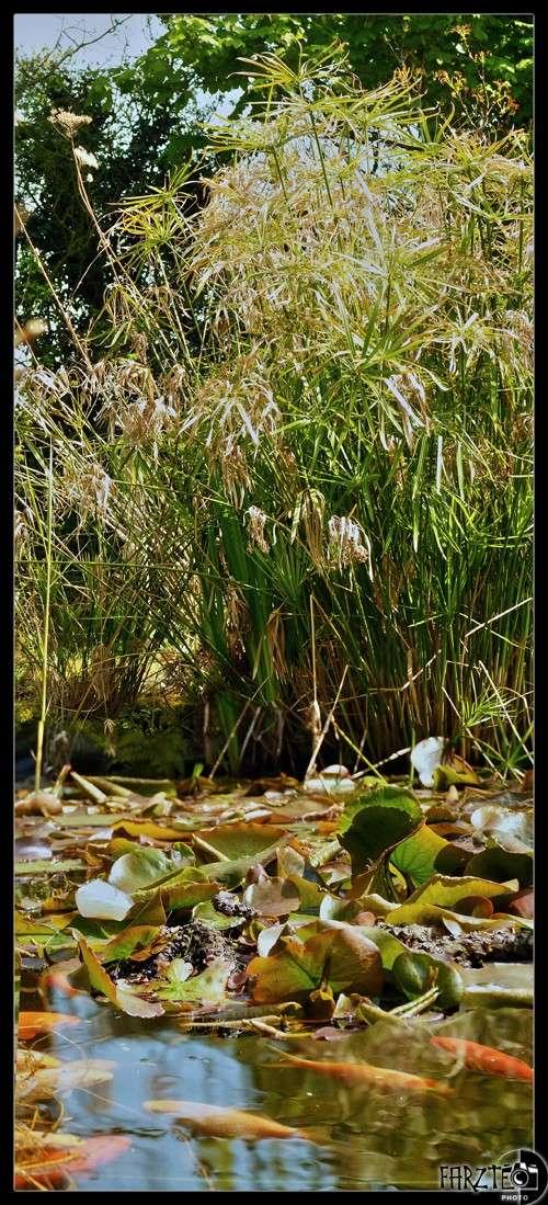 Autour du petit bassin Panor127