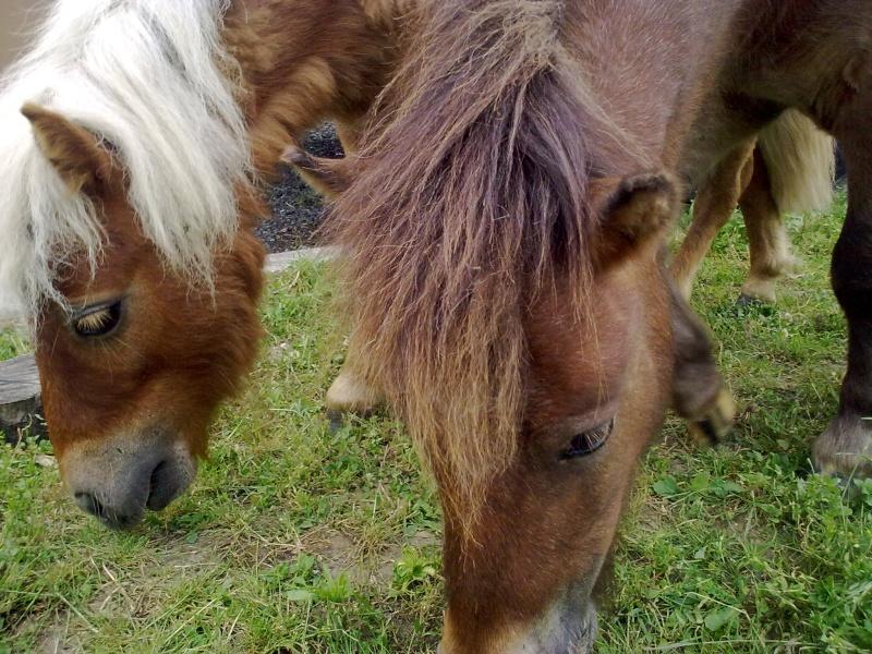 Mon petit élevage de chevaux de Pure Race Espagnole - Page 3 01062011