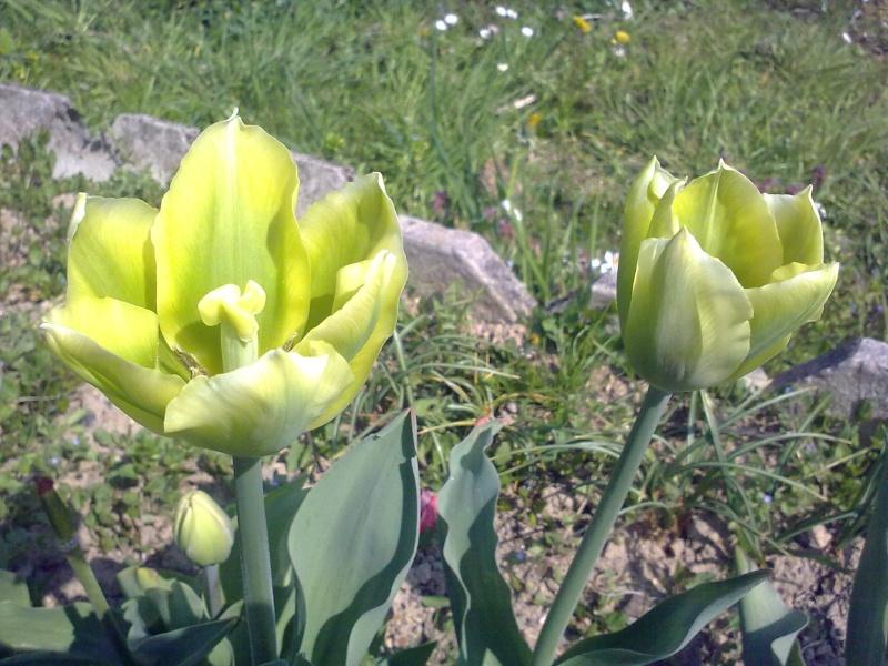 mon jardin 17042020