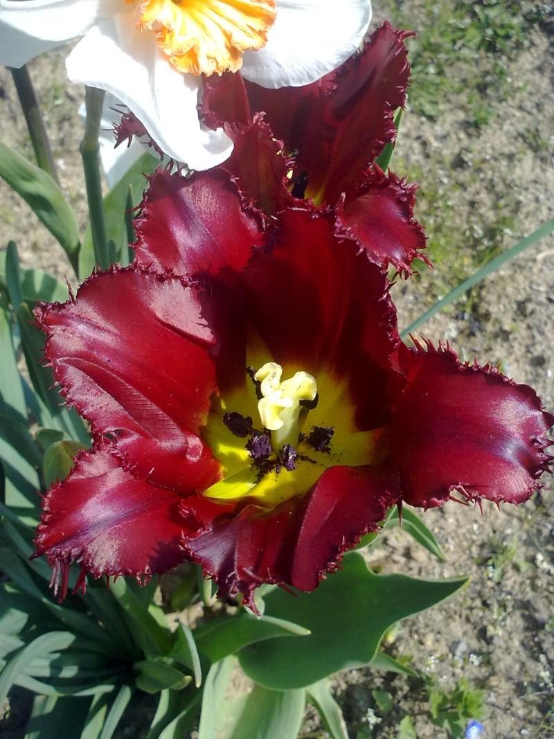 mon jardin 17042021
