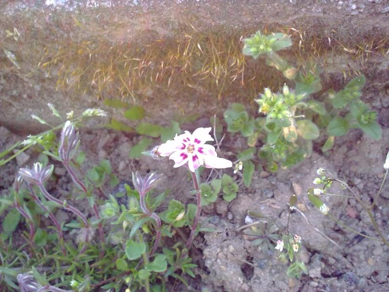 mon jardin 18042011