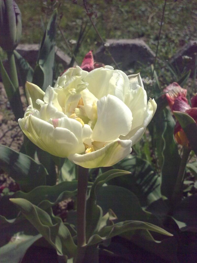 mon jardin 18042016