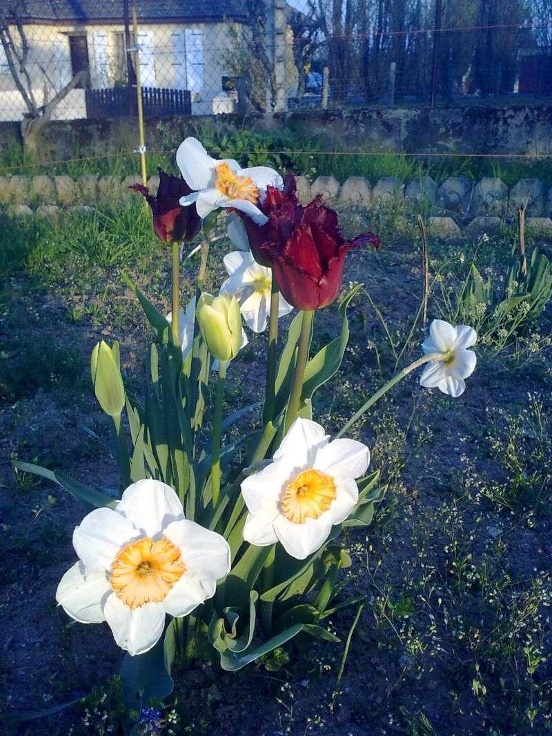 mon jardin 18042017