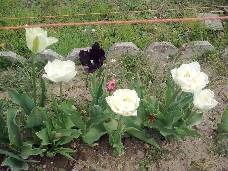 mon jardin 23042011