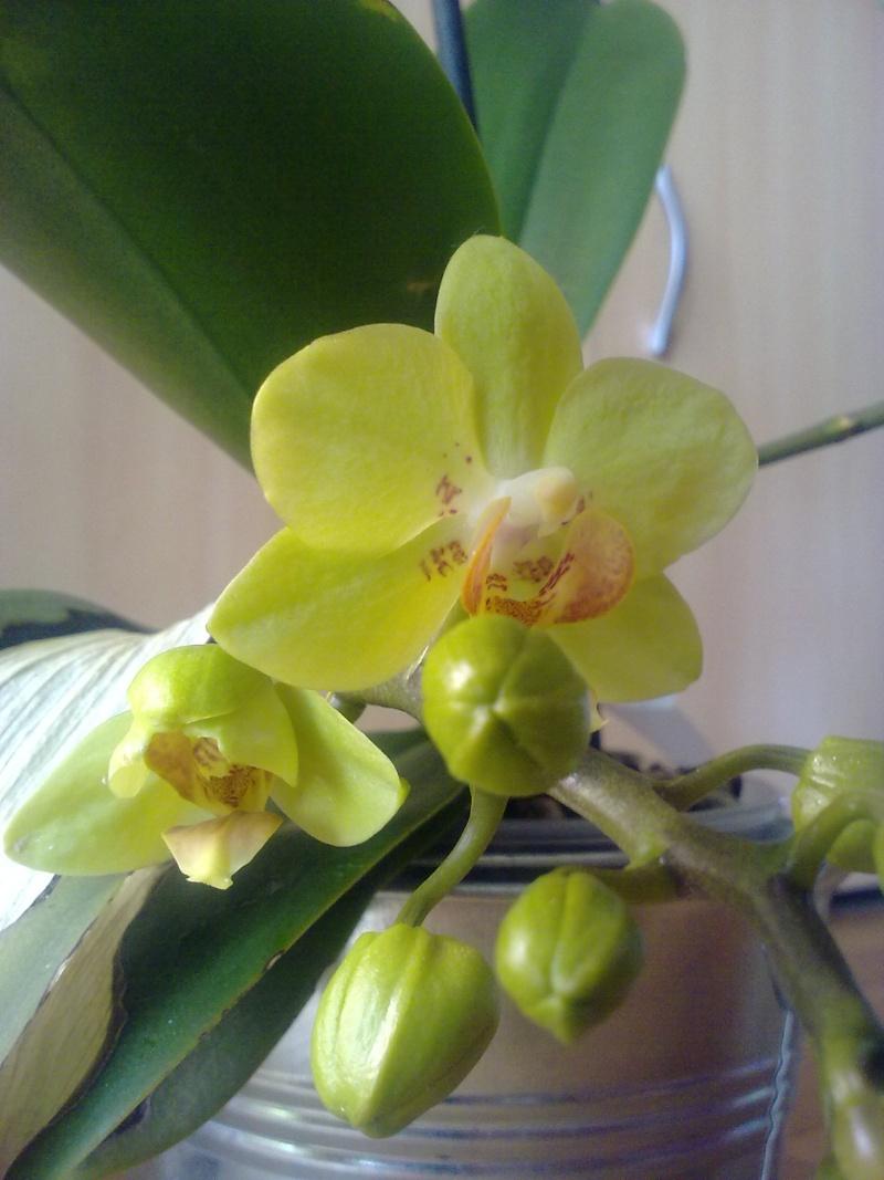 des nouvelles de mon orchidée malade - Page 2 24042010