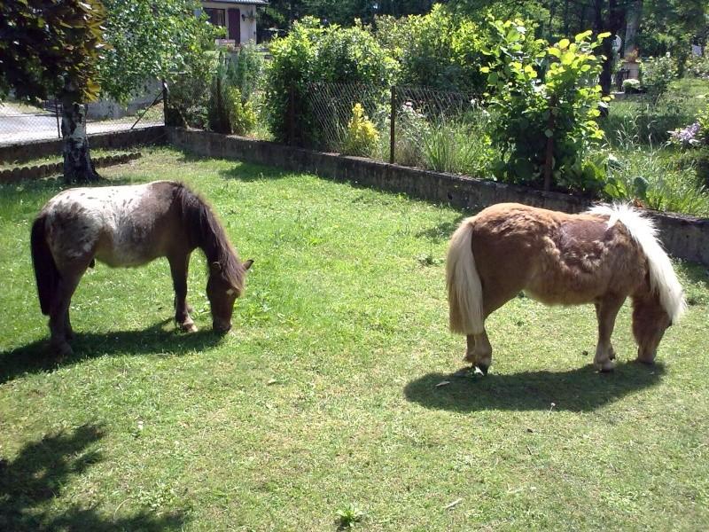 Mon petit élevage de chevaux de Pure Race Espagnole - Page 3 31052011