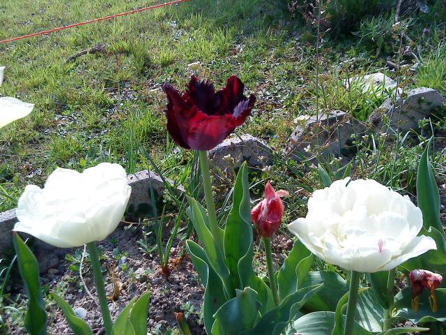 mon jardin Dsc01110