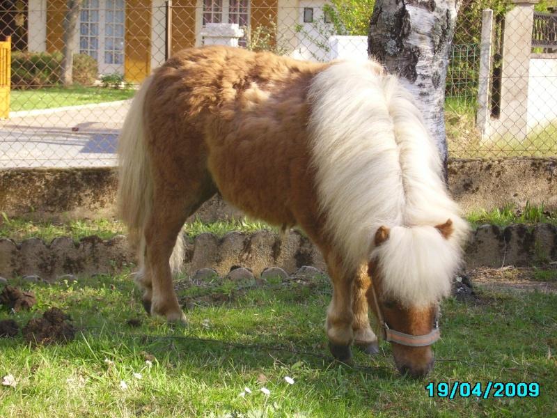 mes bêtes Imgp0113