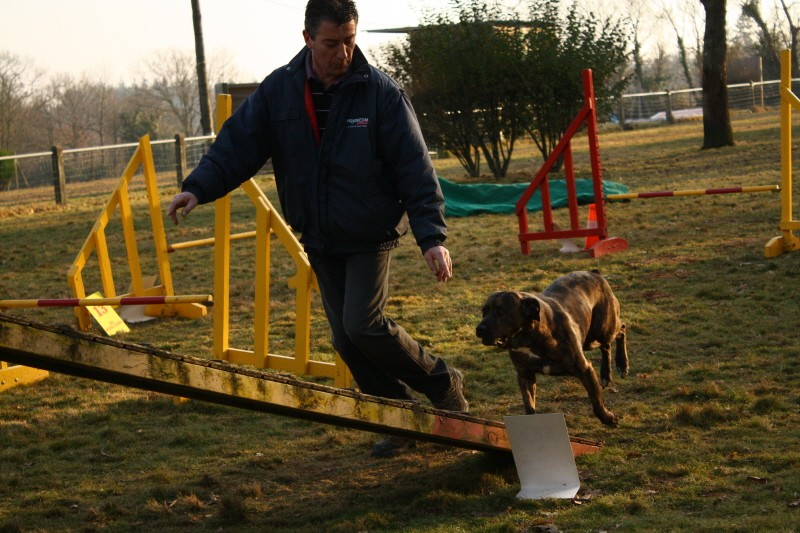 Babouille en agility Bon_la10