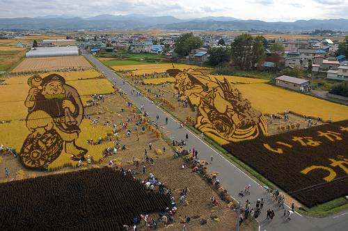 [Japon] - Dessins culture de riz Inakadate 20081010