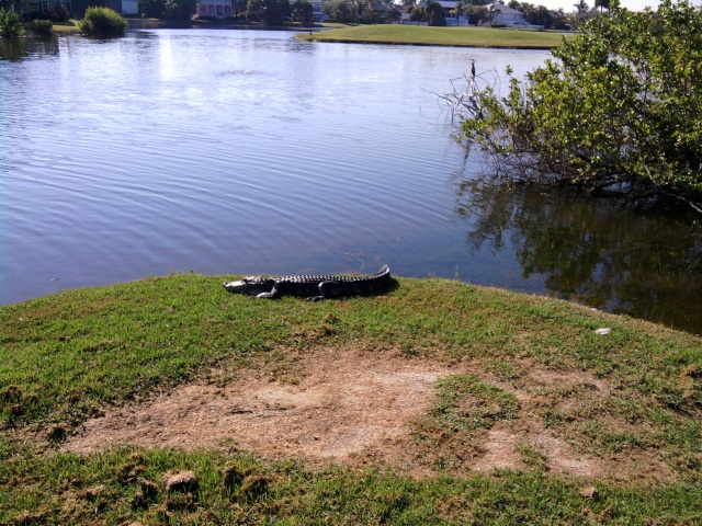 Urbanisme et grands projets en Floride 43235210