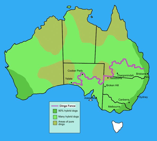Cloture anti dingo / dingo fence Australie 667px-10