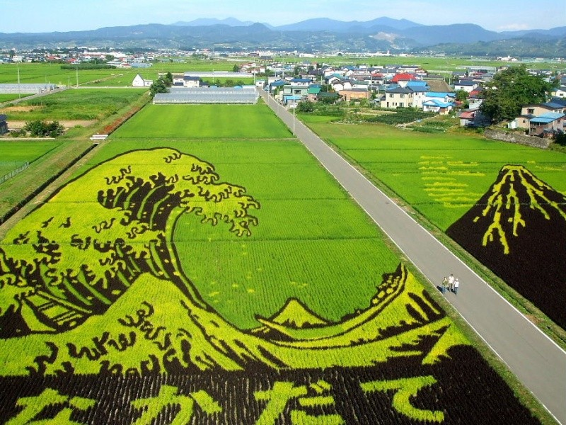 [Japon] - Dessins culture de riz Inakadate B0067510