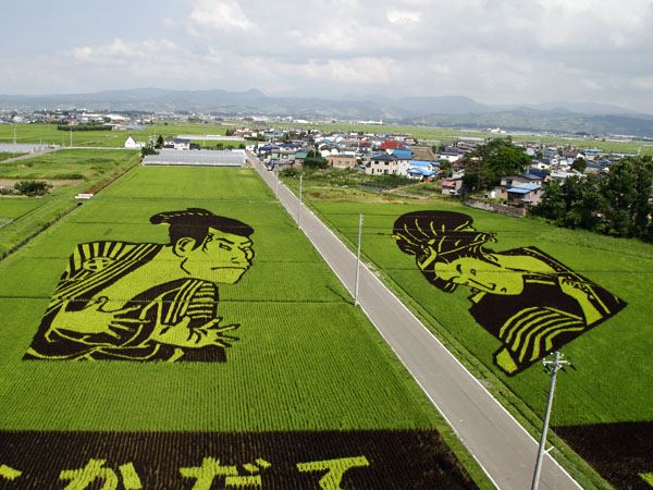 [Japon] - Dessins culture de riz Inakadate Uki10