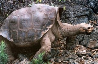 Unesco : les Îles Galapagos en péril !! George10
