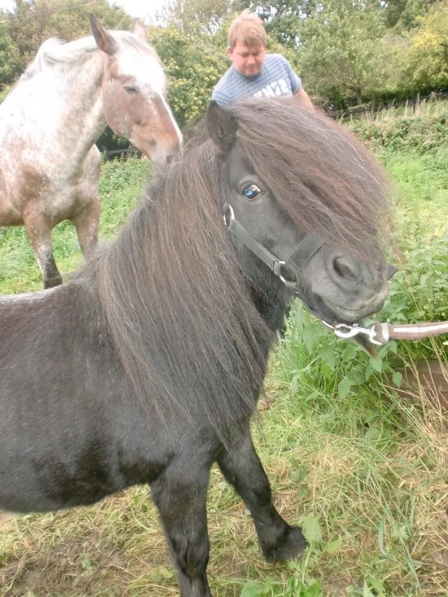 Comment avez vous rencontrer/acheter votre cheval? Cimg0910