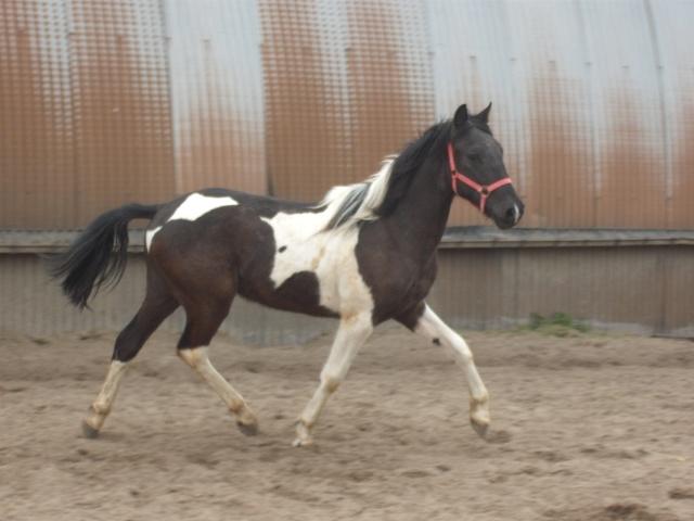 Petit Apache :(              NEW du 09/05/10 Dscf2227