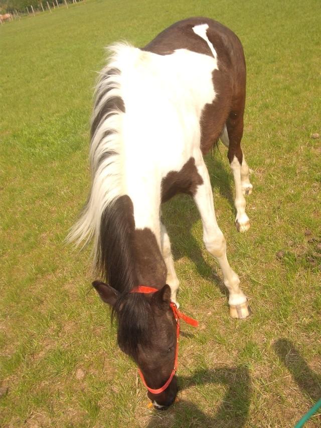 Petit Apache :(              NEW du 09/05/10 Dscf2411