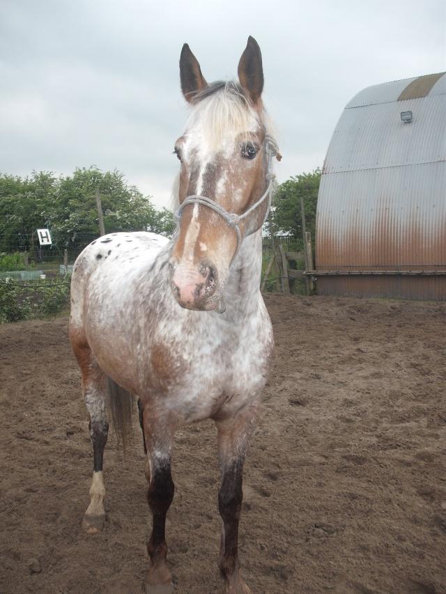 Concours photo : le plus beau portrait de nos chevaux au printemps Dscf2415