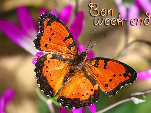 Samedi 26 mars Bon-we11