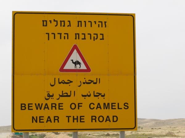 Herborisations en Israël et en Jordanie Chamea10