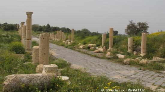 Herborisations en Israël et en Jordanie - Page 3 G11_im15