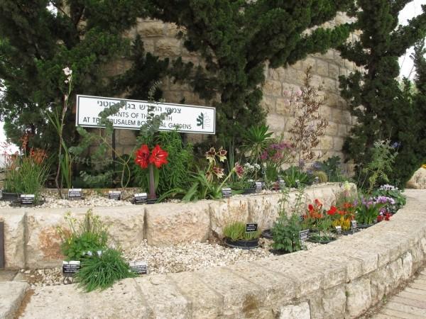 Herborisations en Israël et en Jordanie Jbjer210