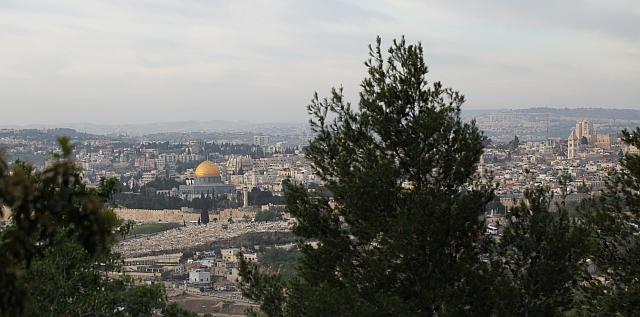 Herborisations en Israël et en Jordanie Jerus10