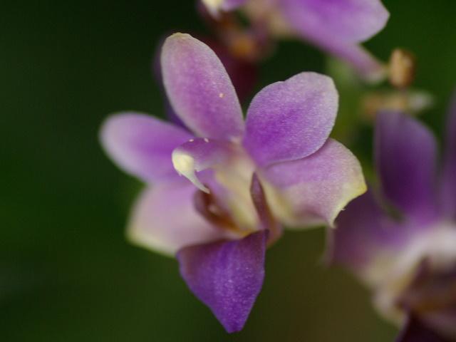 floraisons des orchidées - Page 2 Imgp2412